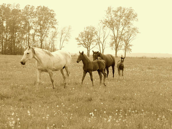 Mixed Media - Foals And Mares On A Foggy Morning In Sepia by Bruce Ritchie