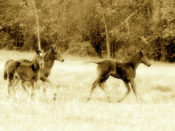 Mixed Media - Foals In Dandelions Sepia by Bruce Ritchie