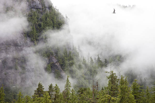 Wall Art - Photograph - Fog And Cloud Cling To The Mountains by Taylor S. Kennedy