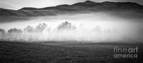 Photograph - Fog In The Cove by David Waldrop