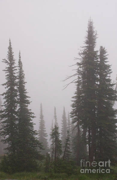Photograph - Fog Obscures by Katie LaSalle-Lowery
