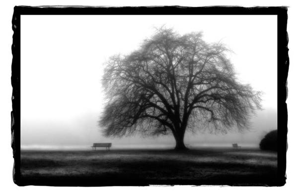 Pyrography - Foggy Day H-4 by Mauro Celotti