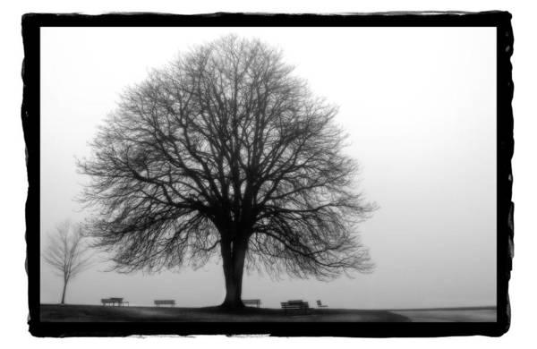Pyrography - Foggy Day H-5 by Mauro Celotti