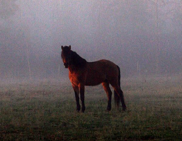 Foggy Morning Greeting Art Print