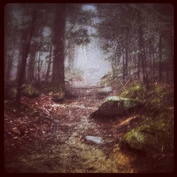 Eden Wall Art - Photograph - Foggy Trail by Dave Edens