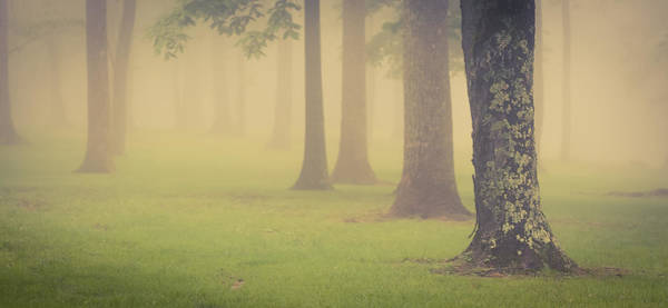Photograph - Foggy Trees Pano by Joye Ardyn Durham
