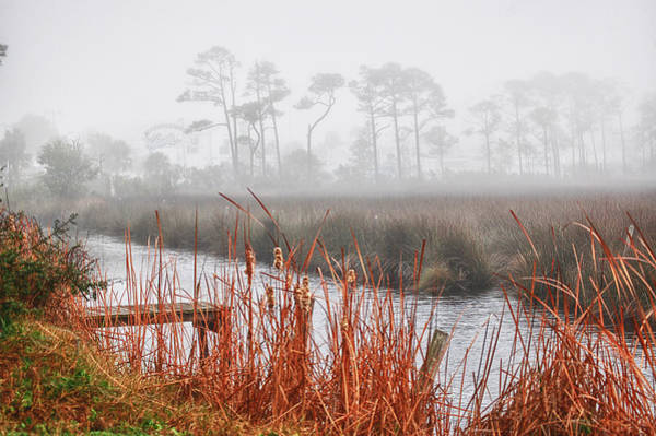 Iguana Digital Art - Foggy Waterville Marsh by Michael Thomas