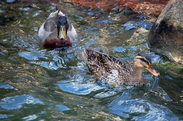 Photograph - Follow The Leader by Donna Proctor