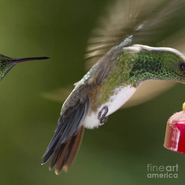 Colibri Photograph - Follow-up by Heiko Koehrer-Wagner