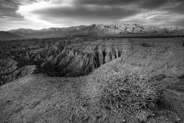 Photograph - Font's Point Bush   Black And White by Peter Tellone