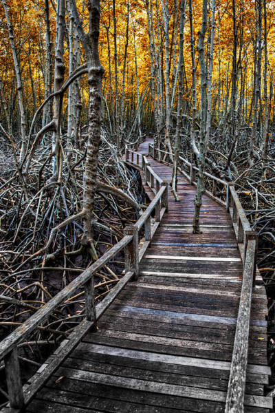 Handrail Photograph - Footpath In Mangrove Forest by Adrian Evans