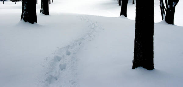 Photograph - Footprint Trail Through The Snow In The Woods by Randall Nyhof