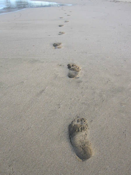 Photograph - Footprints In The Sand by Marilyn Wilson
