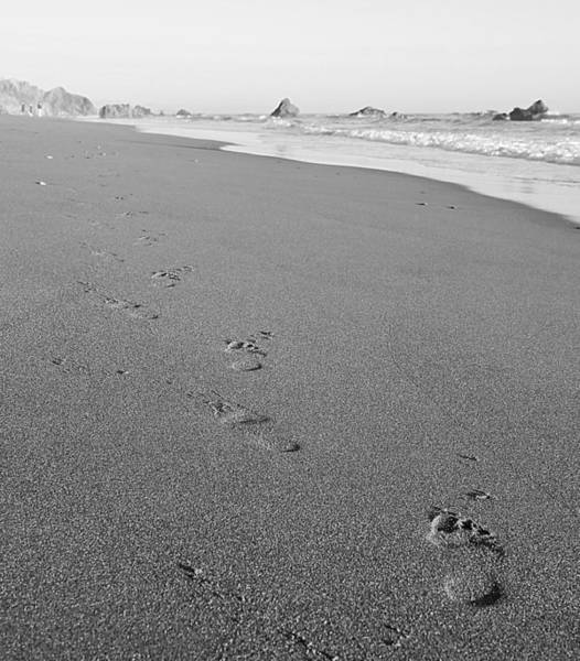 Photograph - Footprints by Pam  Holdsworth