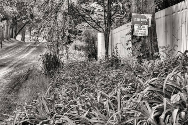 Warrenton Wall Art - Photograph - For The Love Of Dog Bw by JC Findley