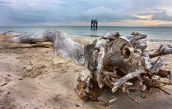 Driftwood Photograph - Drifting Memories by Betsy Knapp