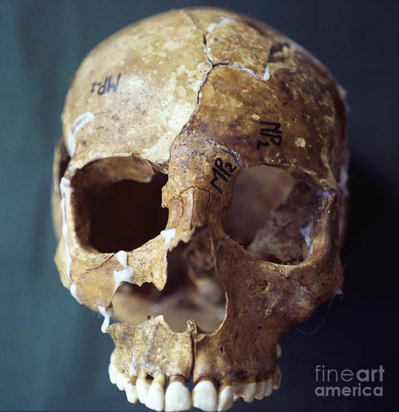 Photograph - Forensic Evidence, Skull Reconstruction by Science Source