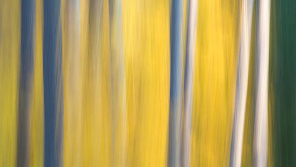 Photograph - Forest Blur by Adam Pender