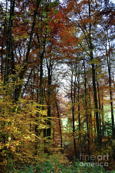 Wall Art - Photograph - Forest Colors by Bruno Santoro