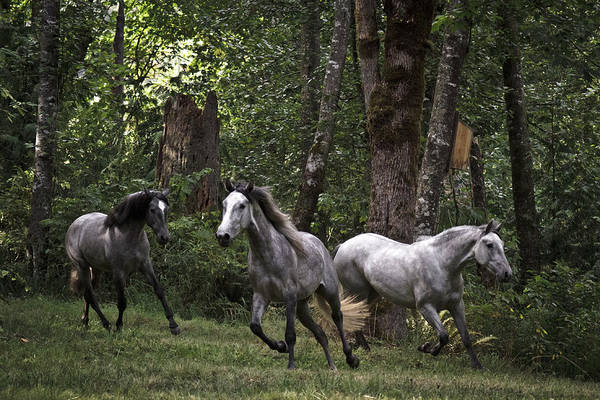 Photograph - Forest Mares by Wes and Dotty Weber