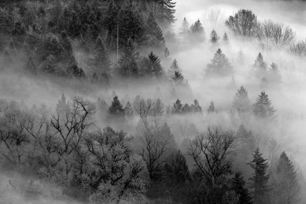 Photograph - Forest Mist by Wes and Dotty Weber