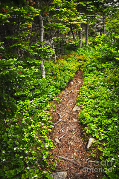 Photograph - Forest Path In Newfoundland by Elena Elisseeva