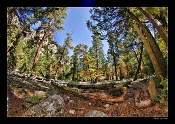 Photograph - Forest Peace  by Blake Richards