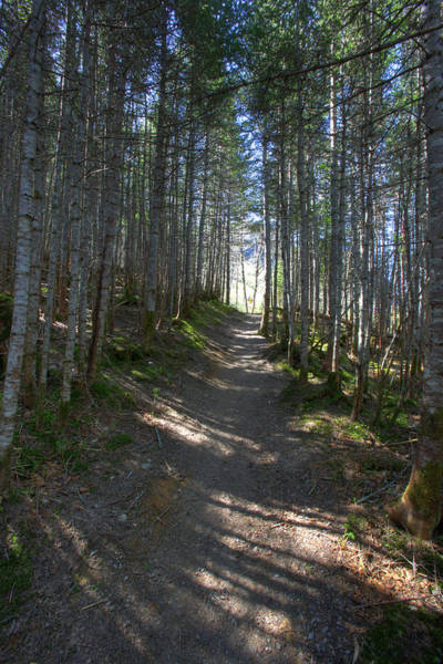 Gros Morne Photograph - Forest Trail, Gros Morne National Park by Robert Postma