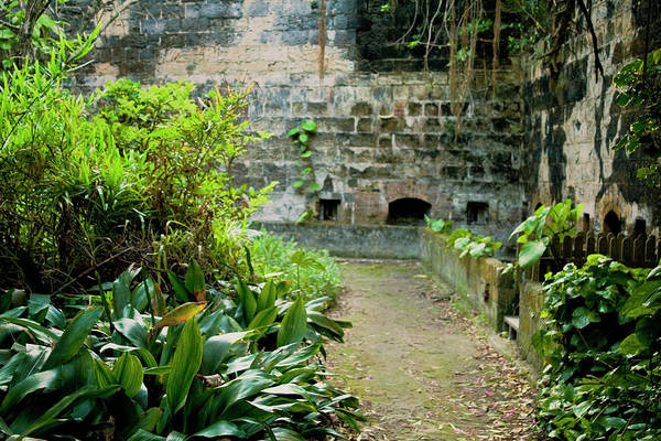 Photograph - Fort Hamilton Plants by Tom Singleton