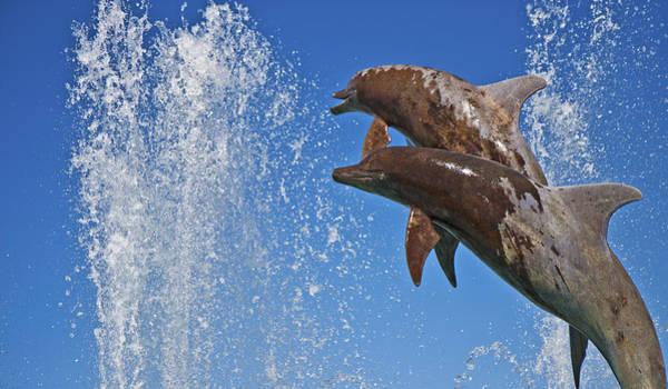Jumping Photograph - Fountain  by Betsy Knapp