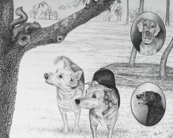 Drawing - Four Dogs And A Squirrel by Mike Ivey