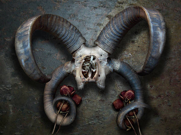 Photograph - Four Horns by Matt Hanson