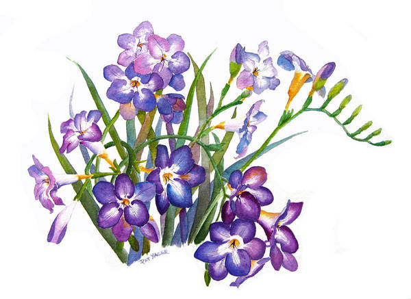 Wall Art - Painting - Fragrant Freesia by Pat Yager
