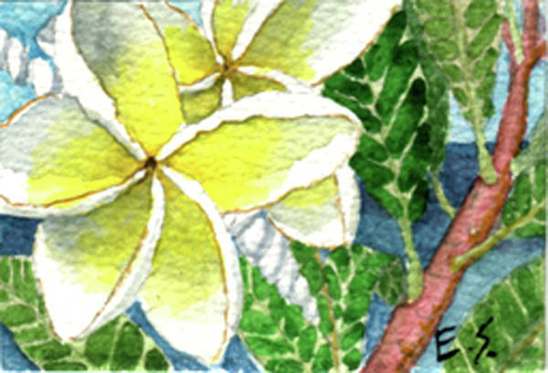 Painting - Fragrant Plumeria by Eric Samuelson