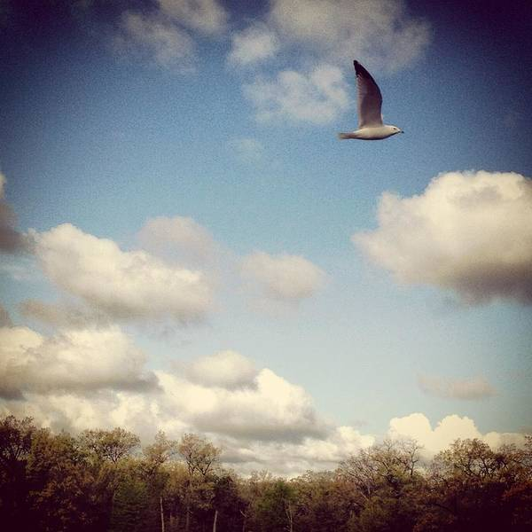 Photograph - Freebird by Lora Mercado
