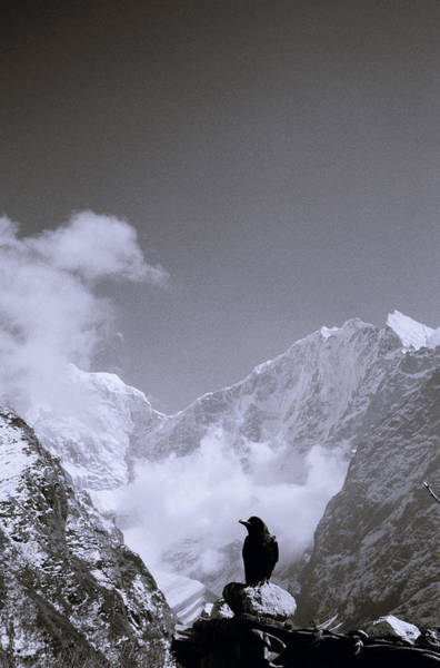 Photograph - Freedom In The Himalayas In Nepal by Shaun Higson