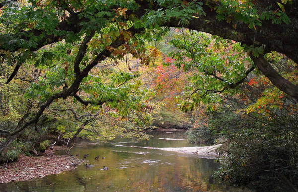 Photograph - French Broad River And Ducks by Duane McCullough