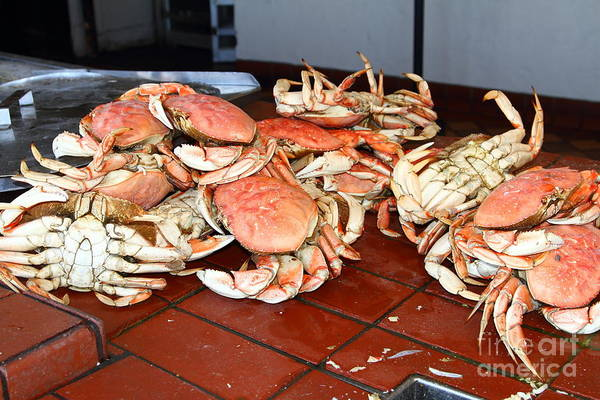 Photograph - Fresh Cooked Crabs At Fishermans Wharf . San Francisco California . 7d14459 by Wingsdomain Art and Photography