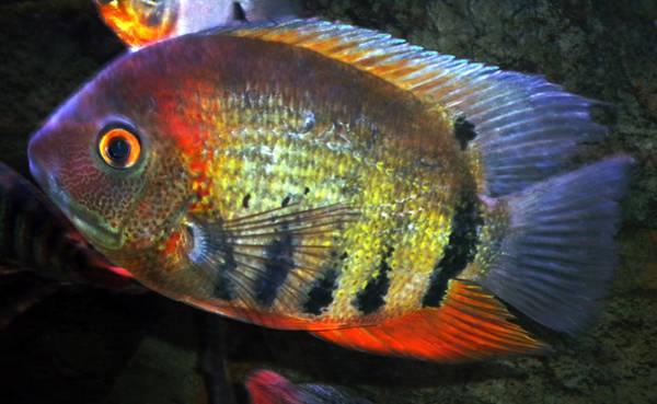 Photograph - Friendly Fish  by Colette V Hera  Guggenheim