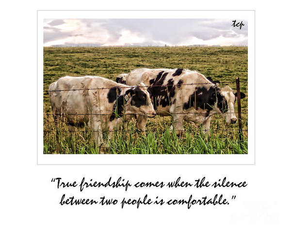Photograph - Friendship by Traci Cottingham