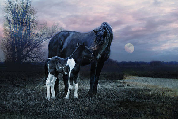 Foal Photograph - Frisian by Joachim G Pinkawa