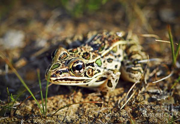 Wall Art - Photograph - Frog by Elena Elisseeva