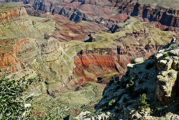 Painting - From Yaki Point 6 Grand Canyon by Bob and Nadine Johnston