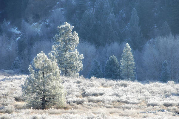 Wall Art - Photograph - Frosted Morning by Donna Blackhall
