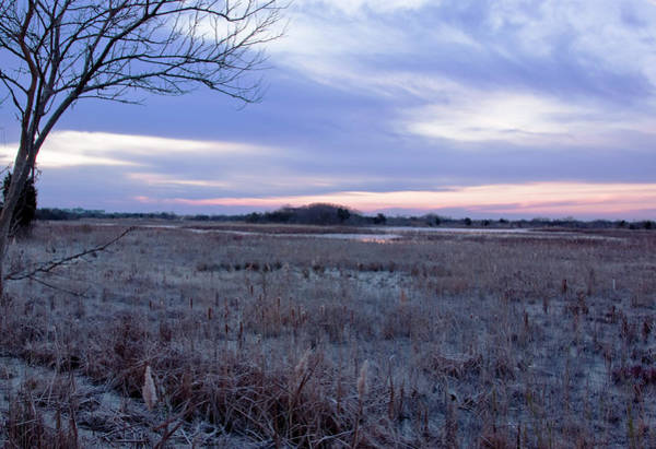 Photograph - Frosty Cape May Meadow by Tom Singleton