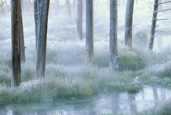 Photograph - Frosty Morning Yellowstone National by Tim Fitzharris