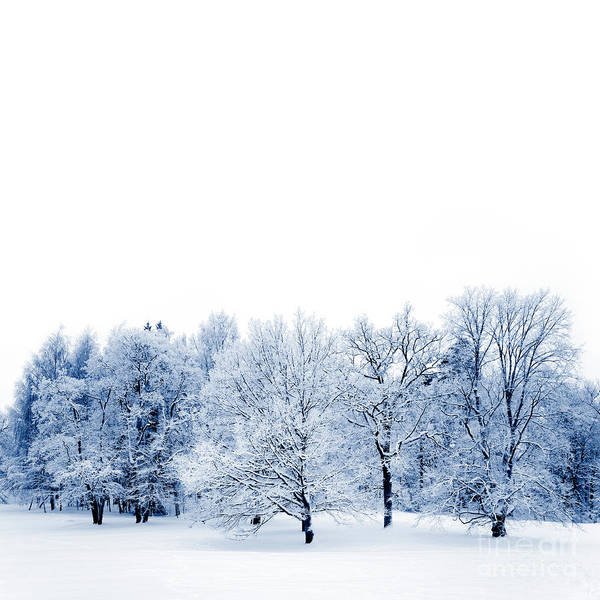 Wall Art - Photograph - Frosty Trees by Kati Finell