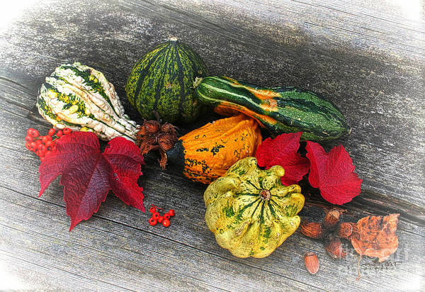 Photograph - Fruits Of Autumn by Jutta Maria Pusl