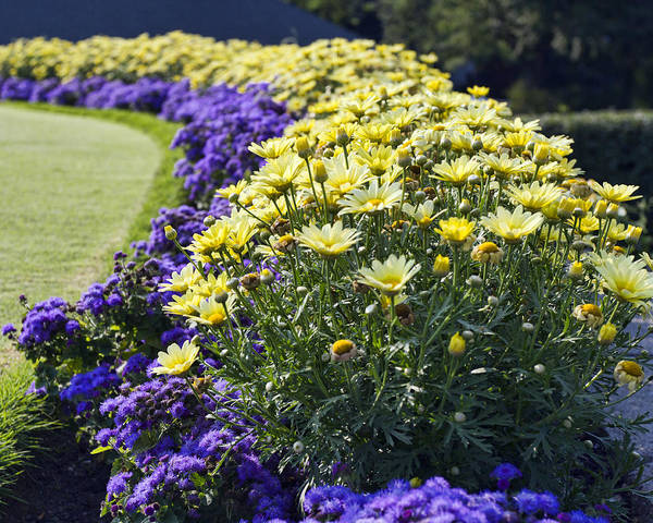 Flower Beds Photograph - Full Bloom by Peter Chilelli