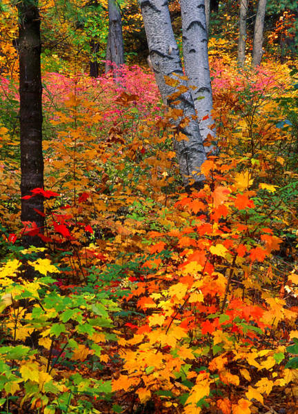 Photograph - Full Fall Palette by Larry Landolfi